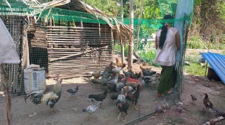 Follow up FHH, Disable, and Poorest farmer on chicken raising at Svay (1)