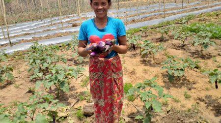 PG vegetable member havest vegetable at Katot village